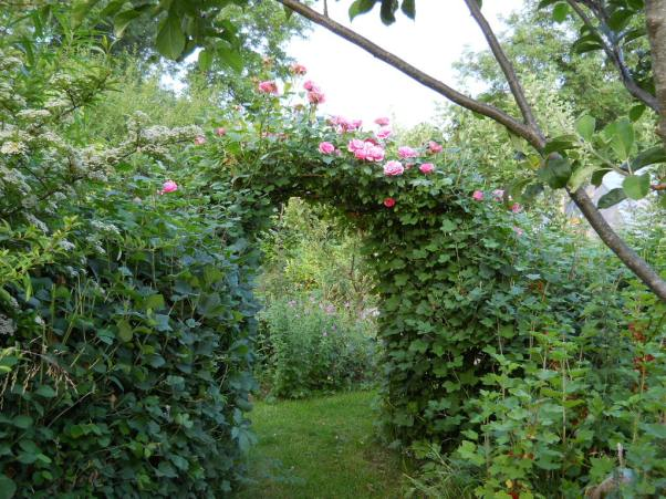 Rose Arch at Bealtaine Cottage Permaculture Gardens