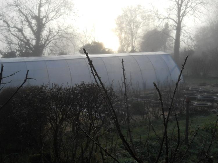 Bealtaine Cottage Feb 2011 006