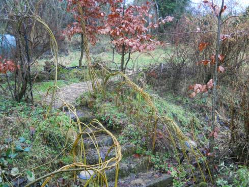 Bealtaine Cottage permaculture hedge