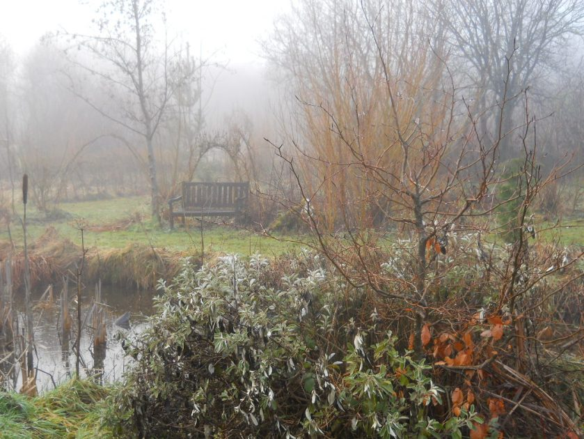 Bealtaine Cottage bog garden