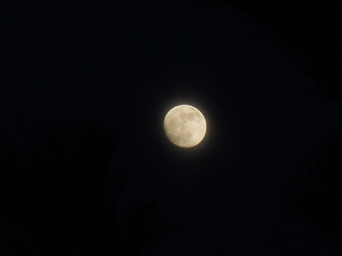 Full Moon at Bealtaine Cottage Permaculture