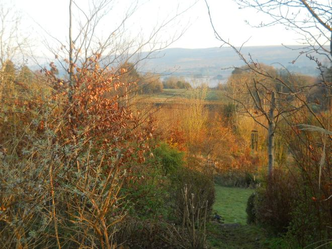 Bealtaine Cottage permaculture planting