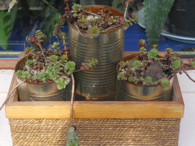 recycling tins at Bealtaine Cottage Permaculture