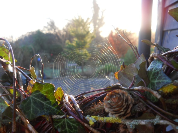 cobwebs Bealtaine Cottage Permaculture March