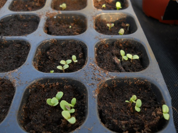 Seeds sowing at Bealtaine Cottage