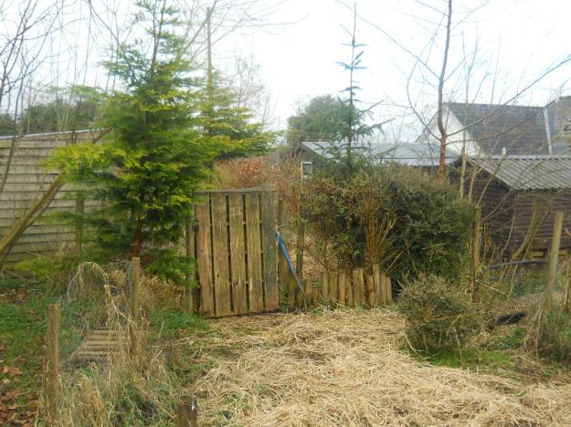 Bealtaine Cottage Permaculture hedges