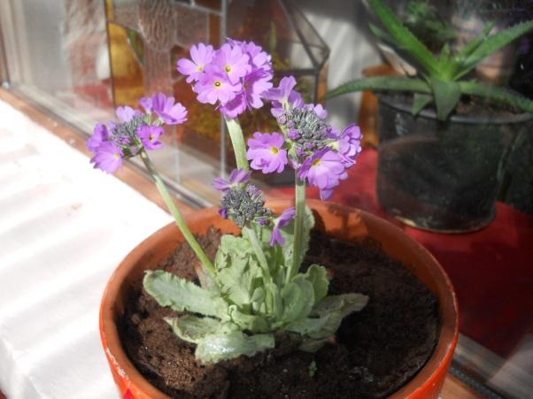 bealtaine Cottage flowers on the windowsill