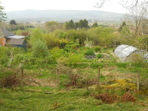 April 2011 bealtaine 015
