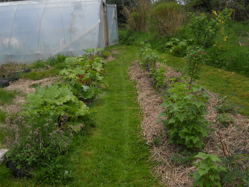 edible garden at bealtaine cottag permaculture