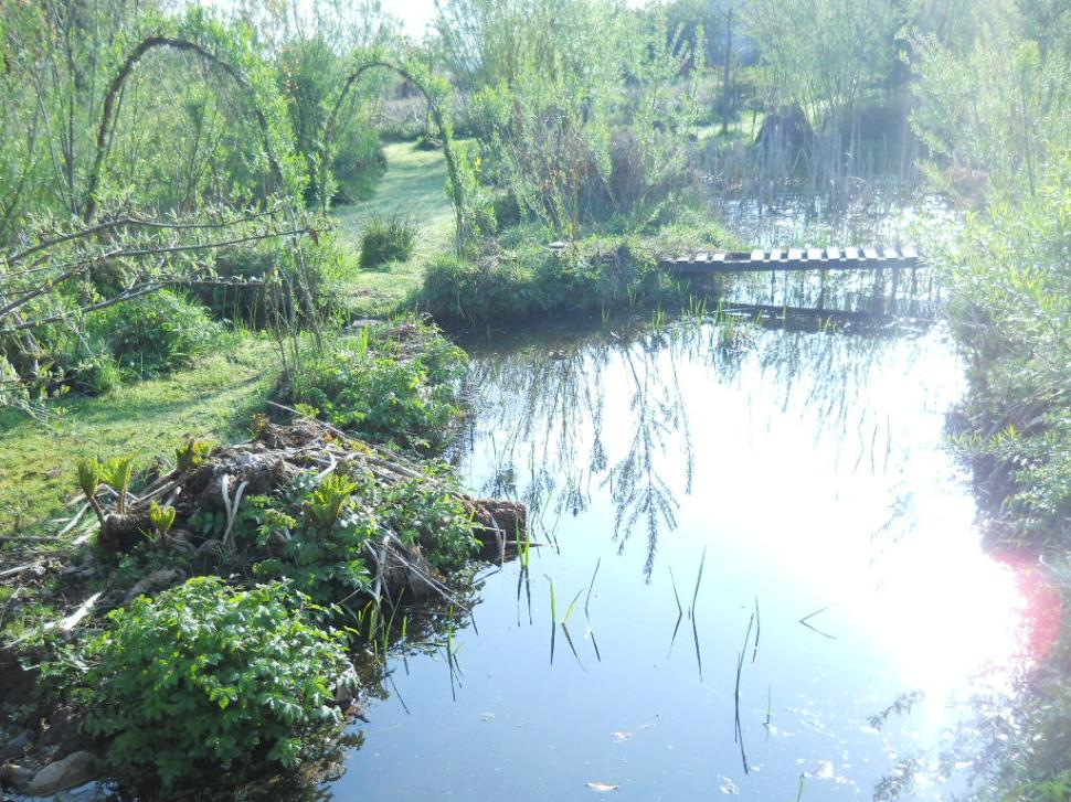 pond in the bog garden at bealtaine Cottage 010