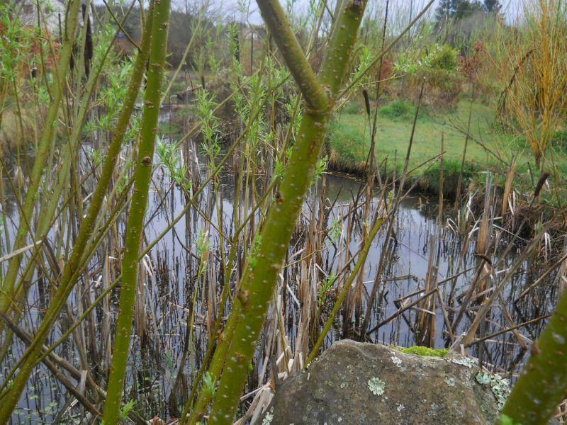 Pond in the Bog Garden at  Bealtaine Cottage