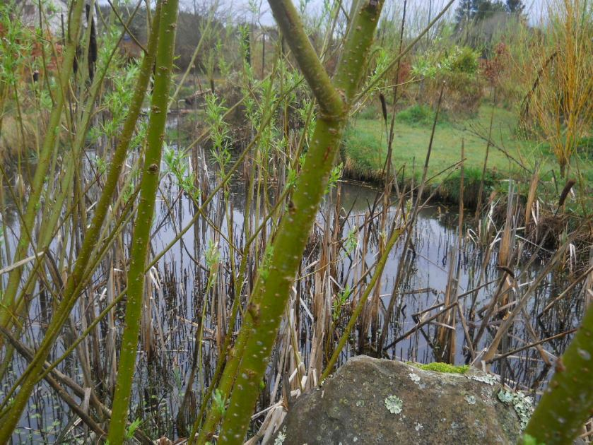 Pond in the Bog Garden at  Bealtaine Cottage