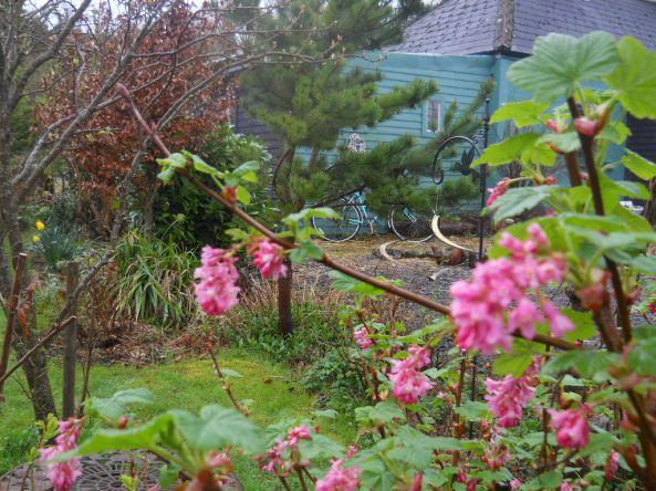 April 2011 Bealtaine Cottage 027