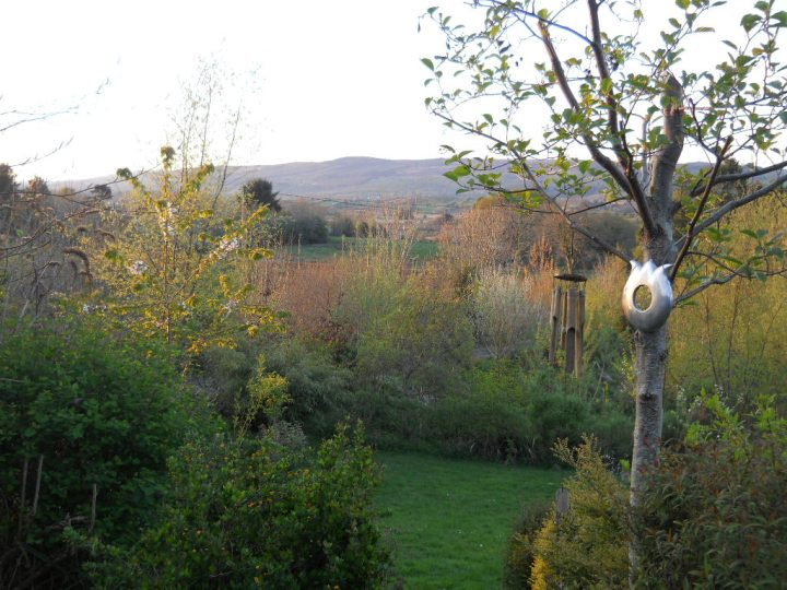 April 2011 bealtaine Cottage 042