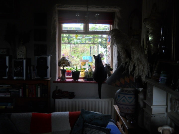 Irusan the cat at Bealtaine Cottage Permaculture cats