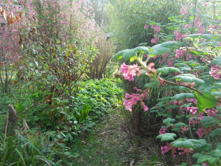 April at bealtaine Cottage Permaculture gardens