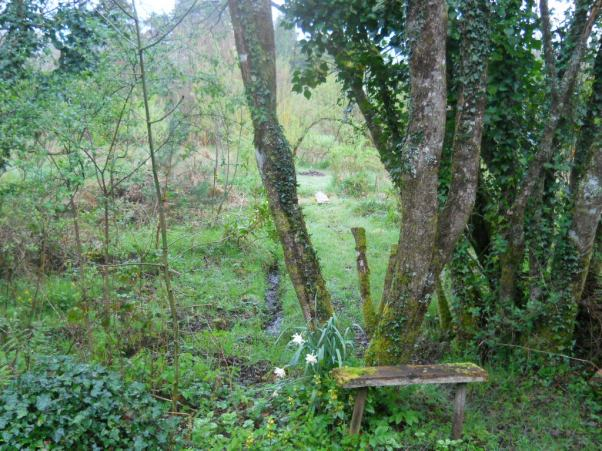 permaculturecottage woodland at Bealtaine Cottage