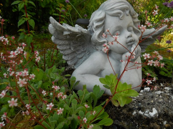 May 2011 bealtaine cottage 002