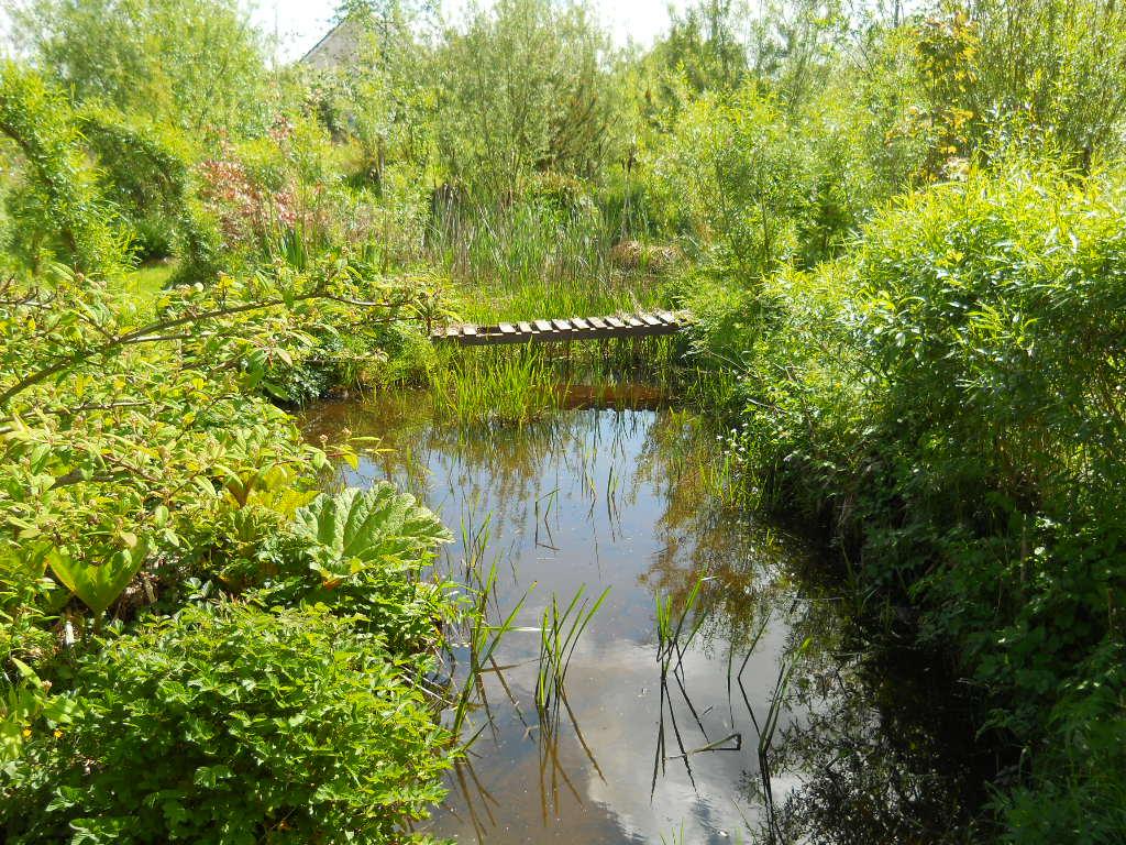 Water garden at Bealtaine Cottage