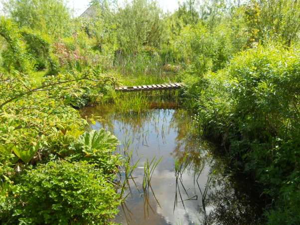 Water garden at Bealtaine Cottage
