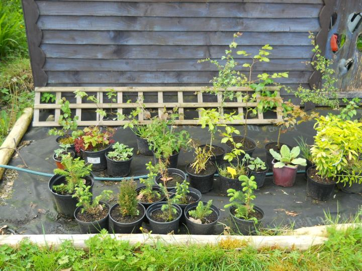 Nursery bed at Bealtaine Cottage