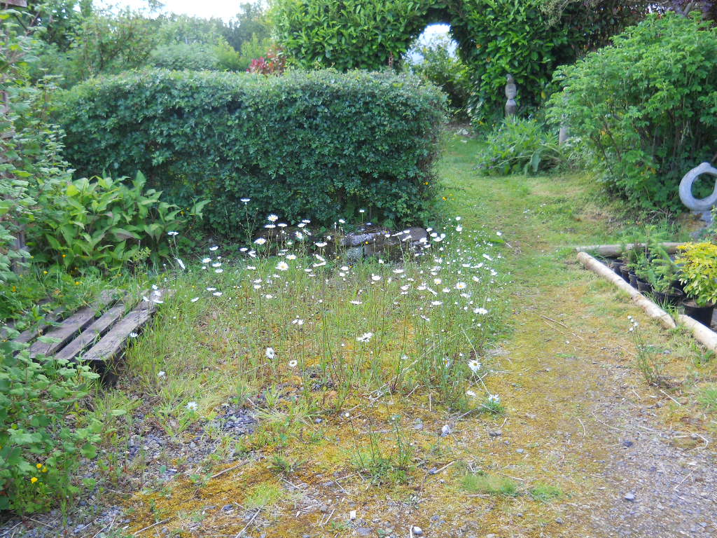 June 2011 Bealtaine Cottage Permaculture 002