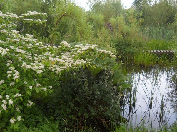Midsummer Magic at Bealtaine Cottage