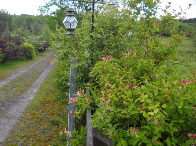 Midsummer Magic at Bealtaine 020