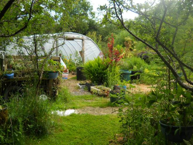 tunnel at Bealtaine cottage005
