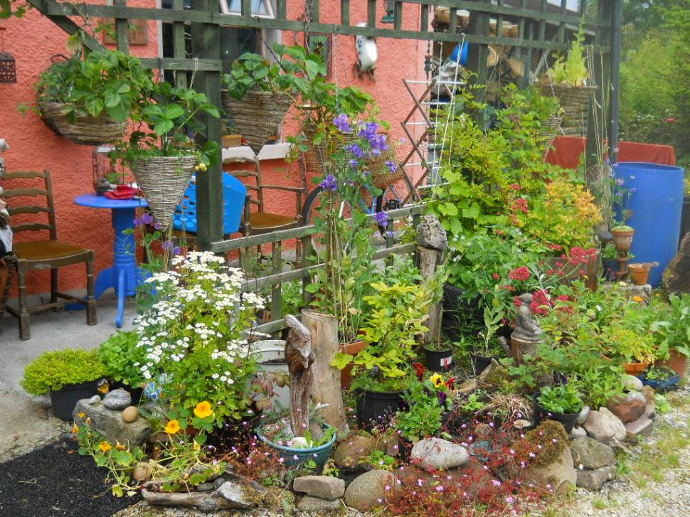 Herbs, flowers and fruit on the veranda at Bealtaine Cottage