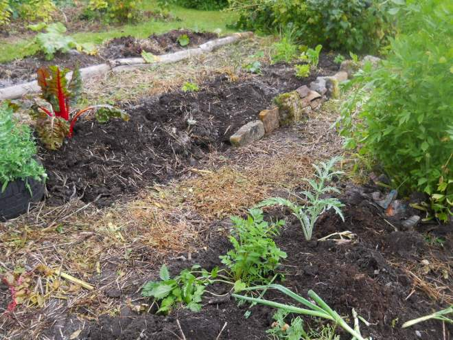 Permaculture Cottage July 2011 007