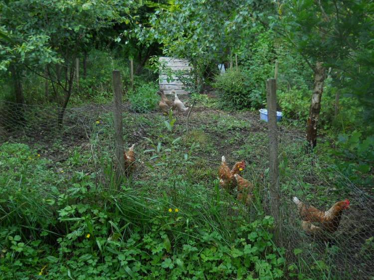 Permaculture Cottage July 2011 016