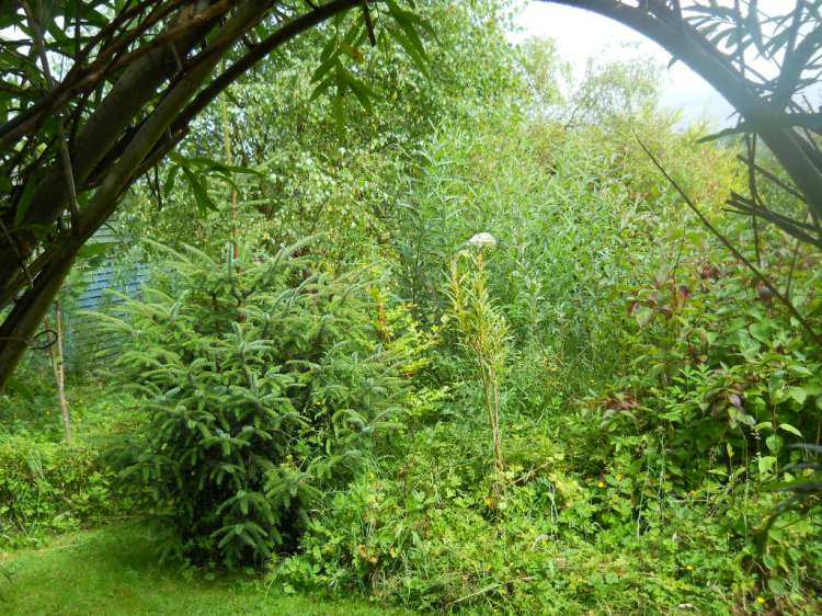 permaculture cottage, july 2011 024