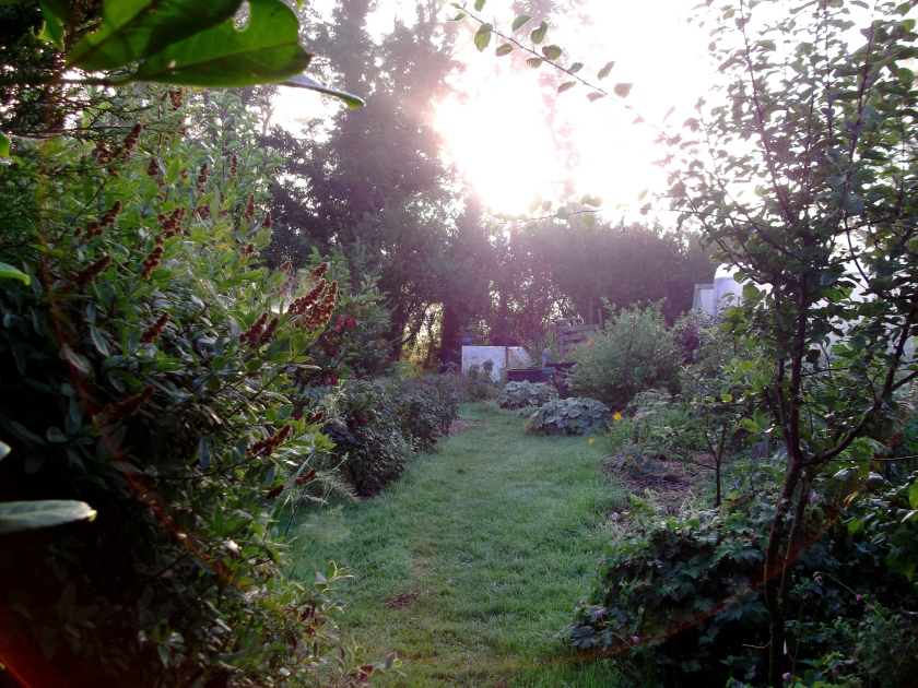 Aug 2011 Permaculture Cottage 001