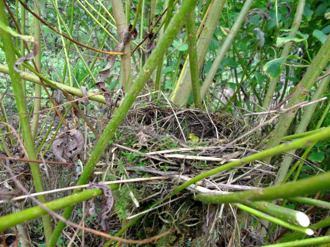 Permaculture Cottage ...September 2011 008