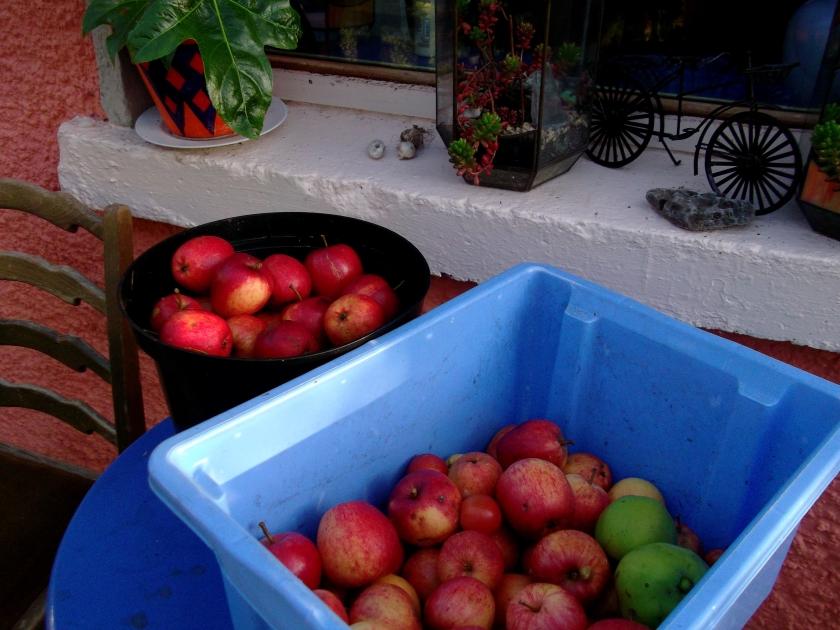 Apple harvest at Bealtaine Cottage
