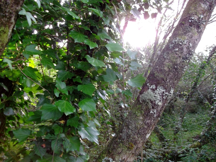 September 2011 Permaculture Cottage 002