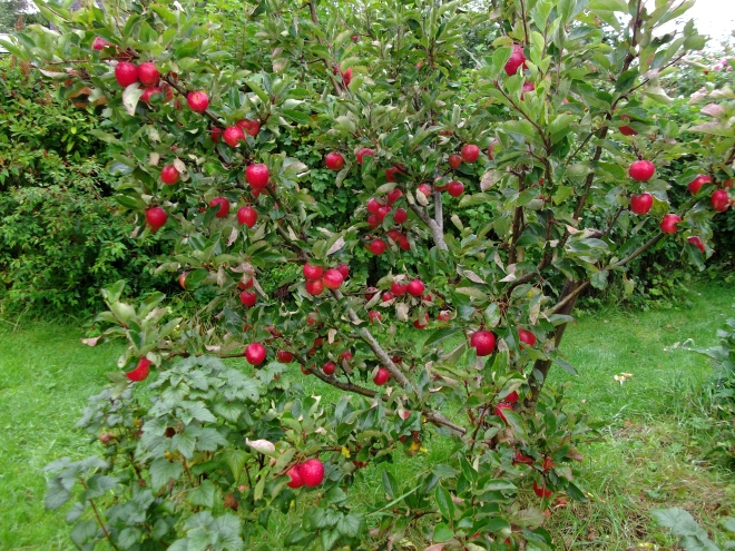 September 2011 Permaculture Cottage 008