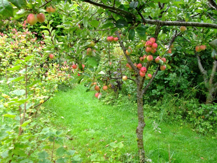 September 2011 Permaculture Cottage 009