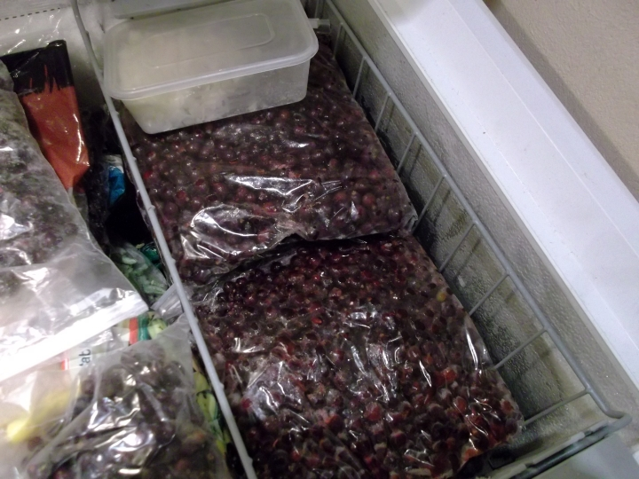 Blackcurrants in the freezer at Bealtaine Cottage