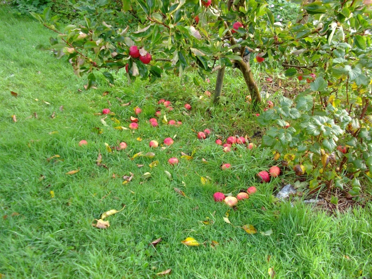 Apples at Bealtaine Cottage
