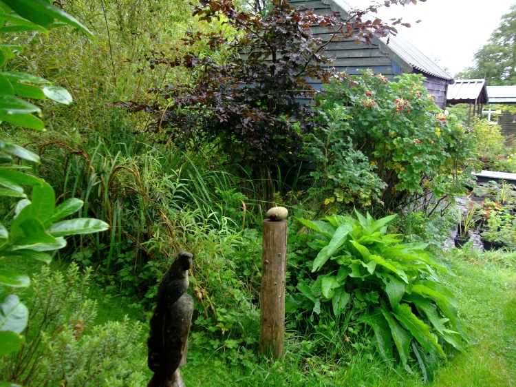 September 2011 Permaculture Cottage 016