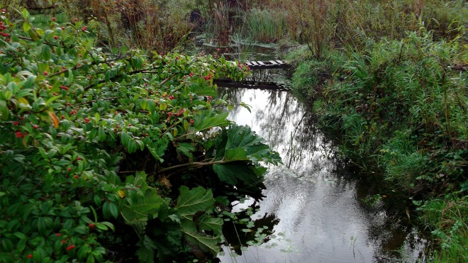 November Bealtaine Cottage permaculture pond