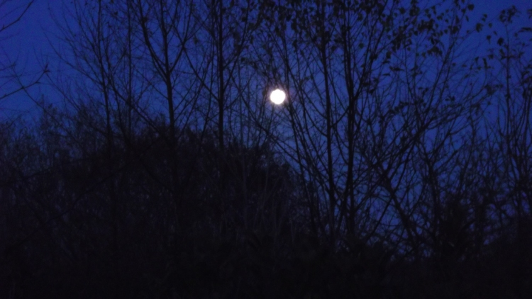 Bealtaine Cottage moon rising over the permaculture gardens