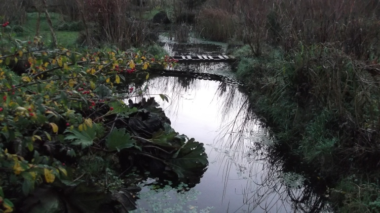 Bealtaine Cottage December Permaculture pond