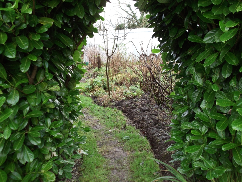 Laurel arch at bealtaine cottage permaculture gardens