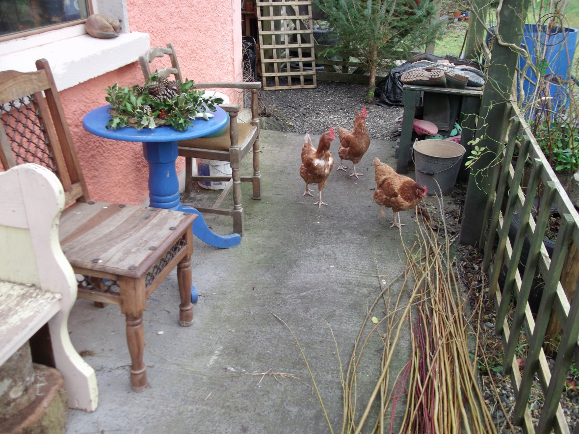 Hens at Bealtaine Cottage Jan 2012