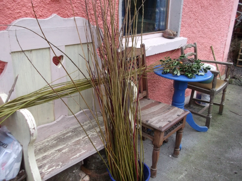 Tying Willow from the Permaculture gardens