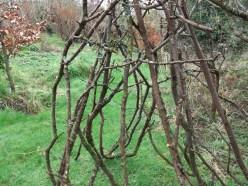 Bealtaine Cottage Feb 11 001