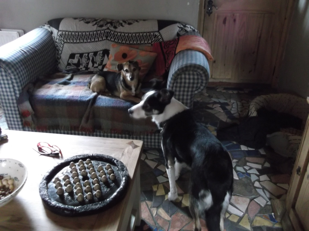 Bealtaine Cottage dogs Flo and Jack
